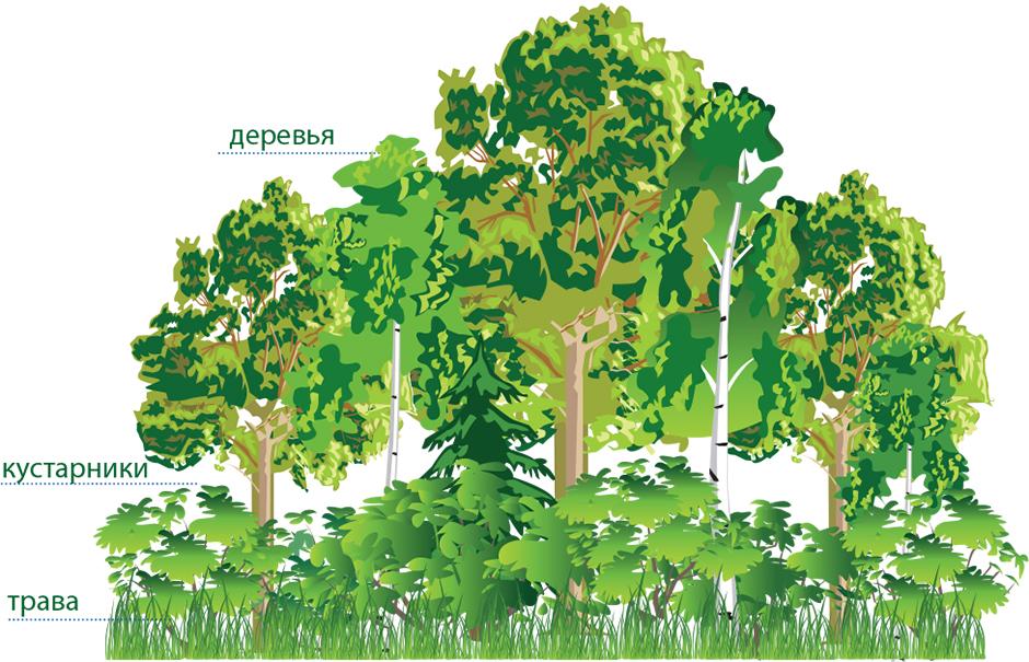 Схема ярусного озеленения